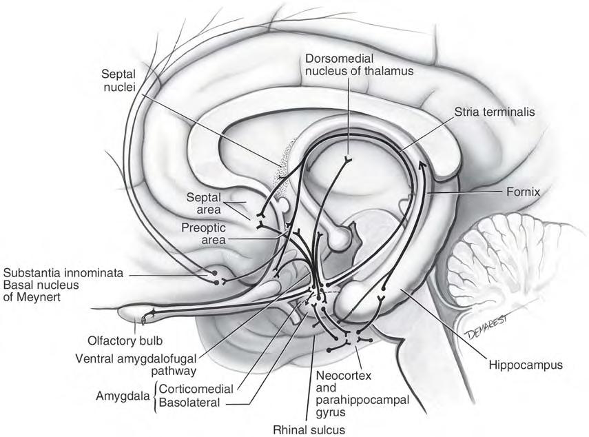 BrainAreaFMM - aHuman Wiki